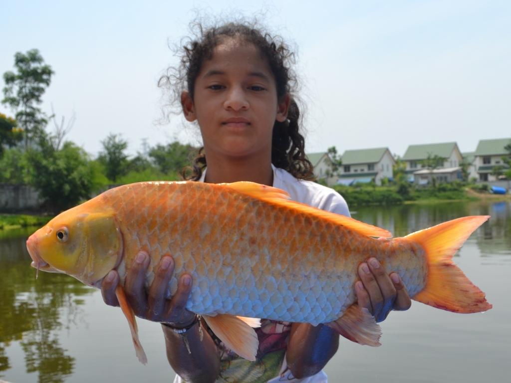 World record koi carp for Largest koi fish