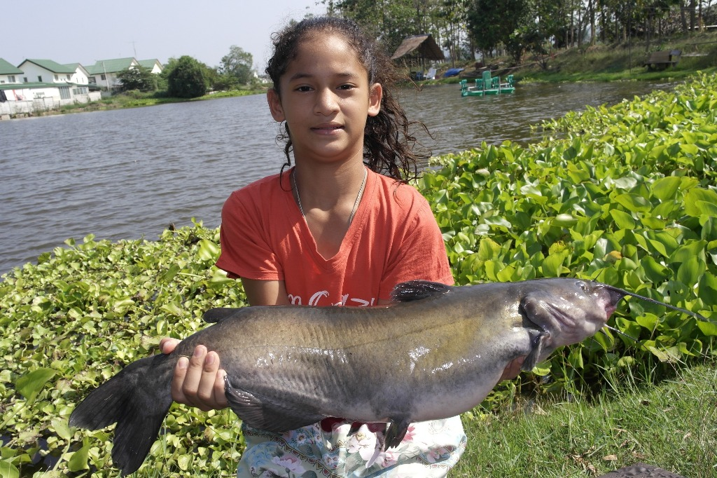 Fishing Holidays at Palm Tree Lagoon and Khao Laem Dam in ... - photo#39