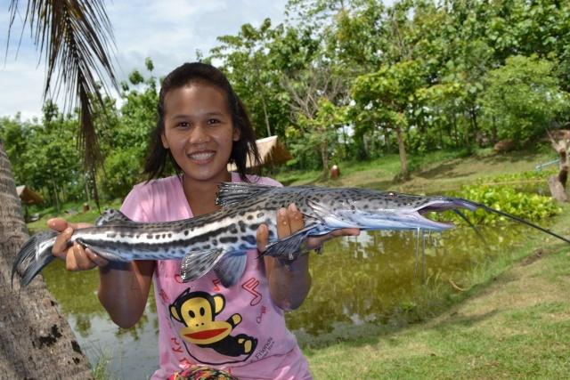 Firewood Catfish : Firewood Catfish, Achacubo