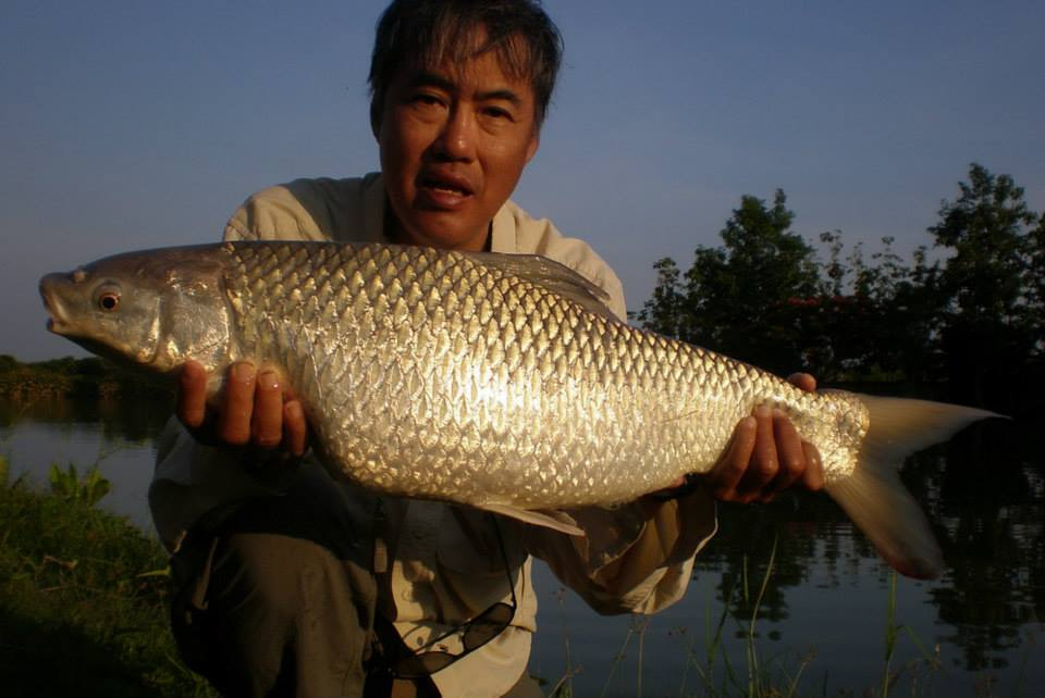 Gallery - Fishing in Thailand at Teak Tree Lake Mrigal