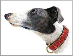 portrait of greyhound