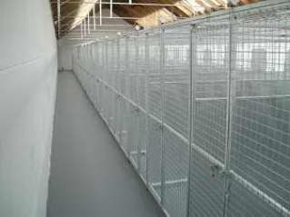 Luxury Dog Boarding Kennels in Ayrshire.